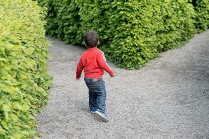 Child At Crossing Hedges